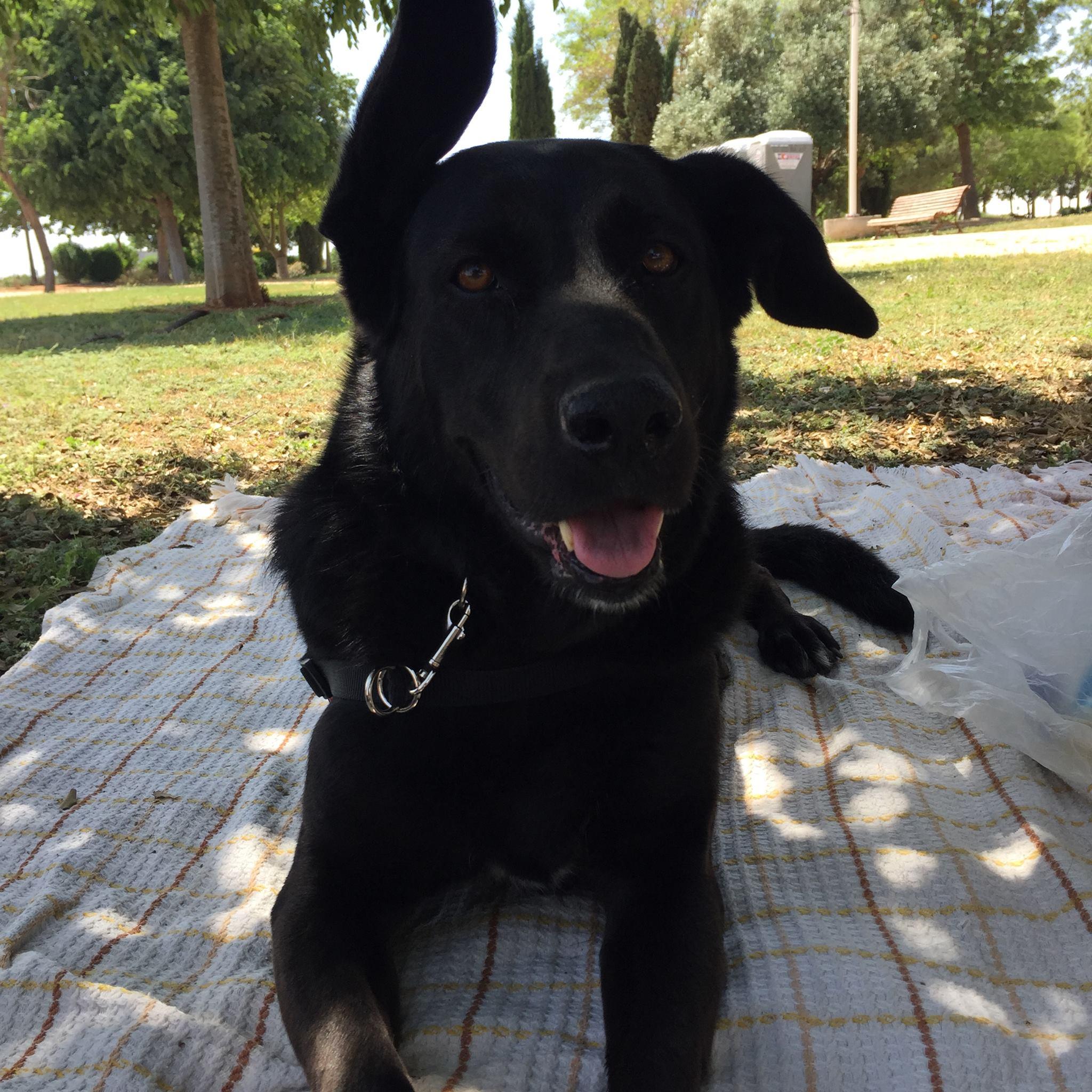 dogsanimal blog educación canina