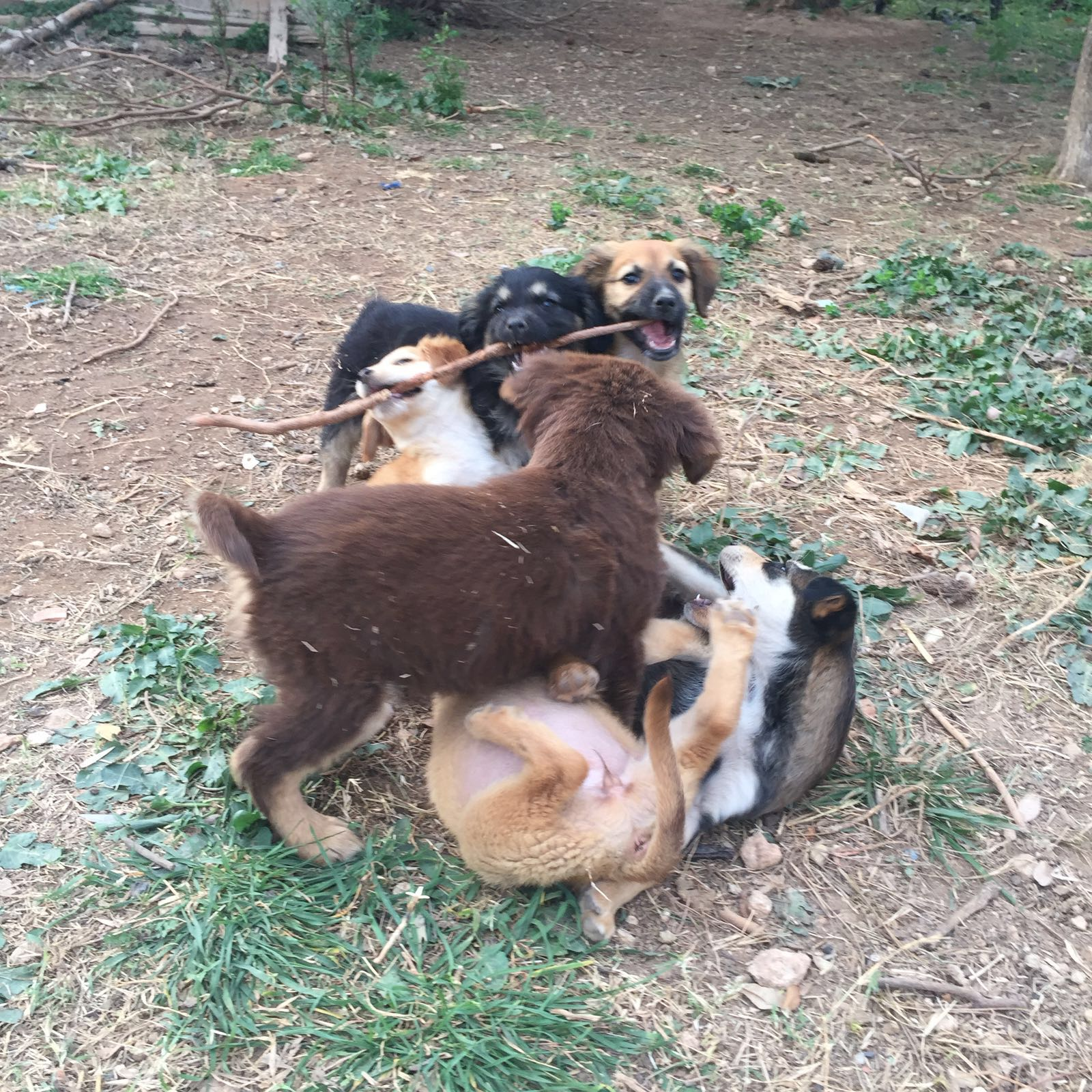 Dogsanimal Emoción animal - Curso de cachorros en valencia