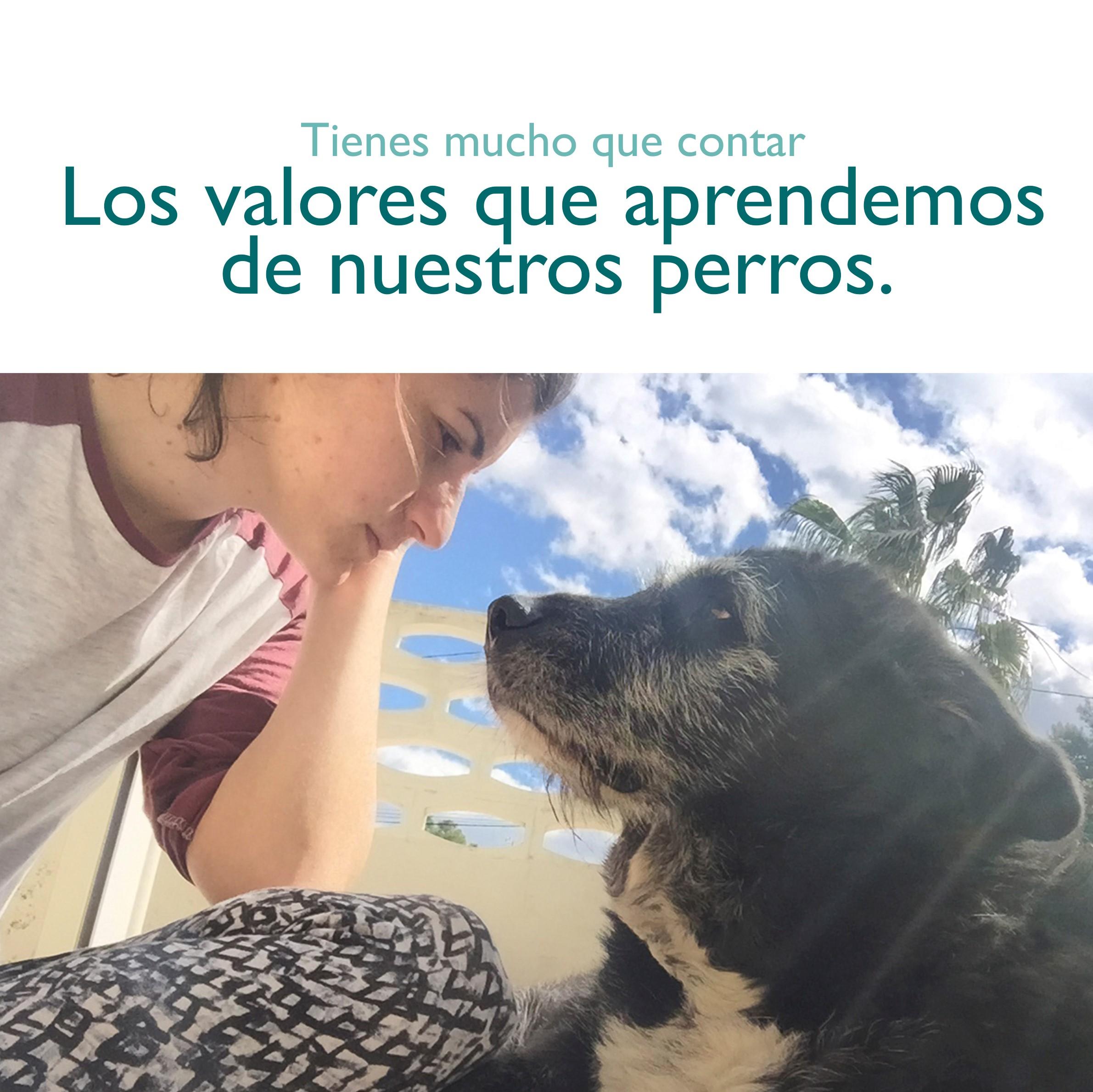 dogsanimal-taller-valores-emocion-animal-perros-comunicacion-mercado-autoras