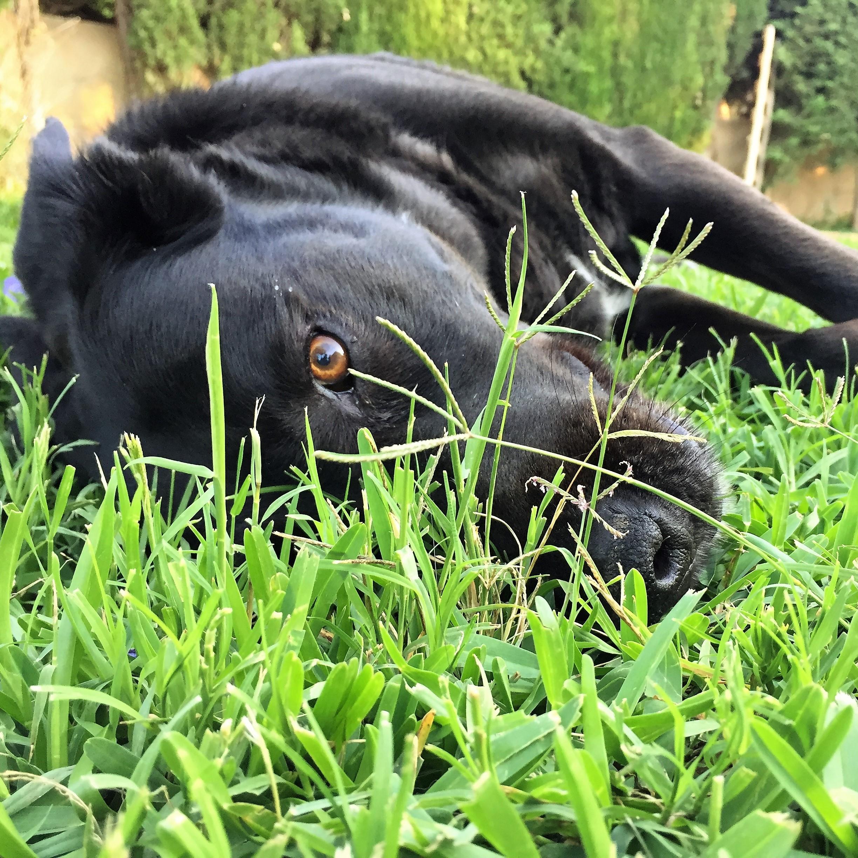 dogsanimal-emocion animal-blog-autoestima-portada-abril