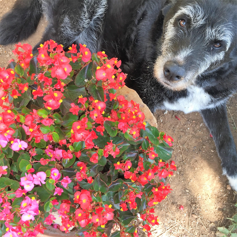 dogsanimal-emocion-animal-blog-nos-enfadamos-con-nuestros-perros