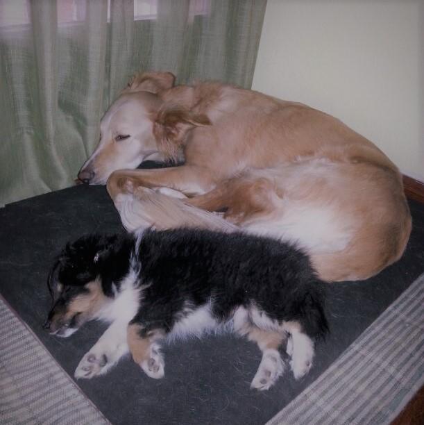 dogsanimal blog cachorros adultos