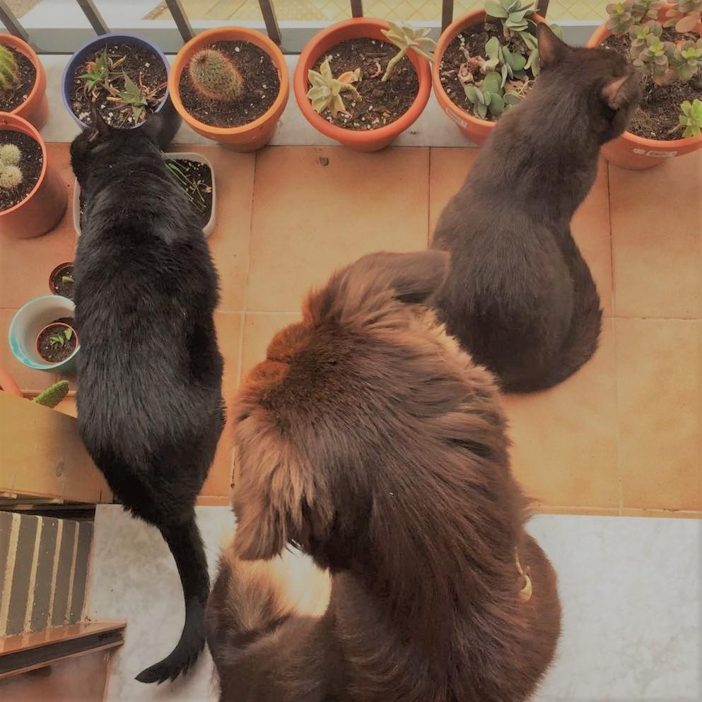 dogsanimal blog presencia