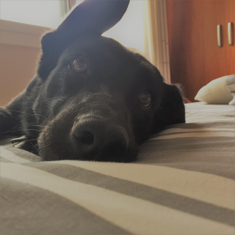 dogsanimal blog adoptar perro adulto