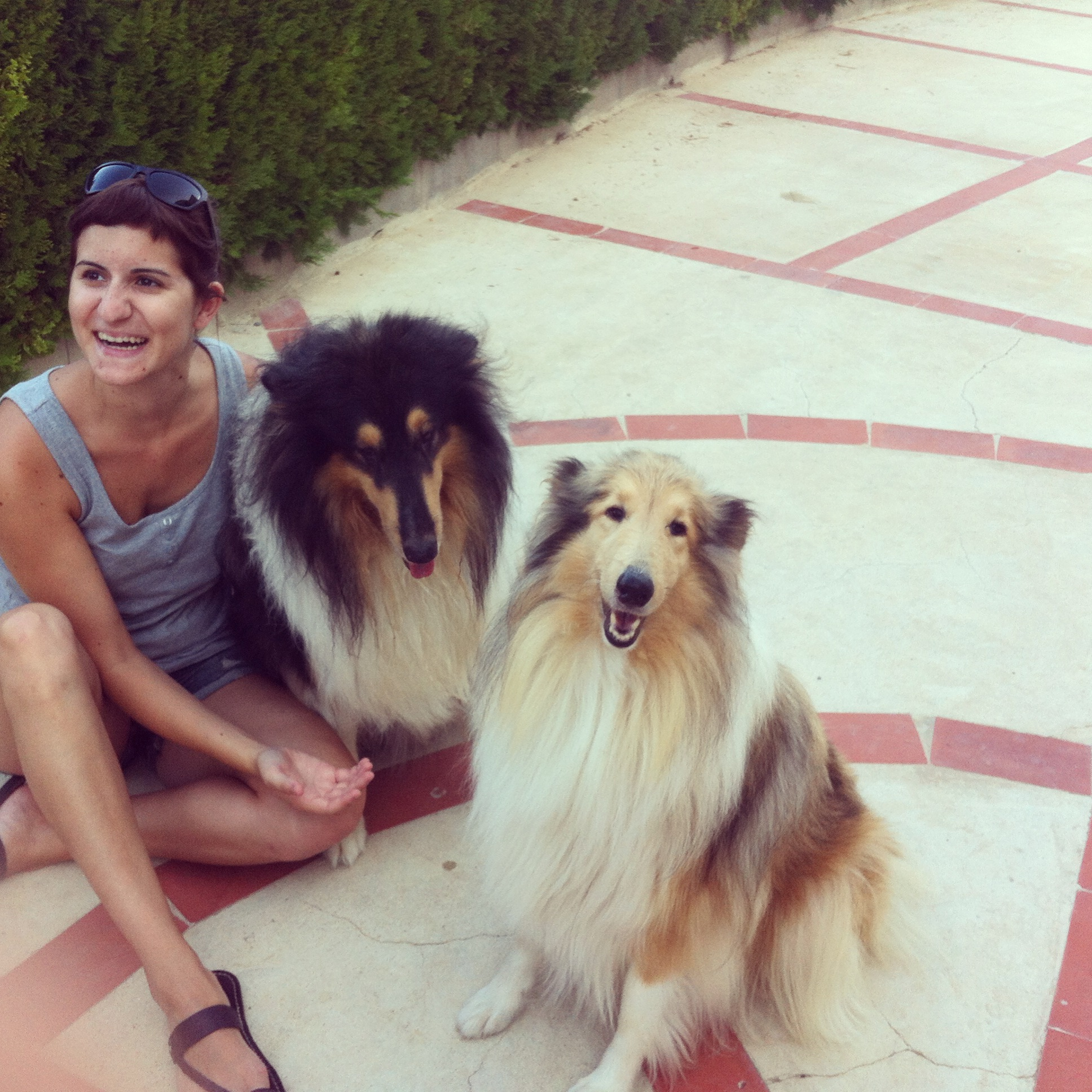 dogsanimal educacion canina emocion animal alternativa rough collie
