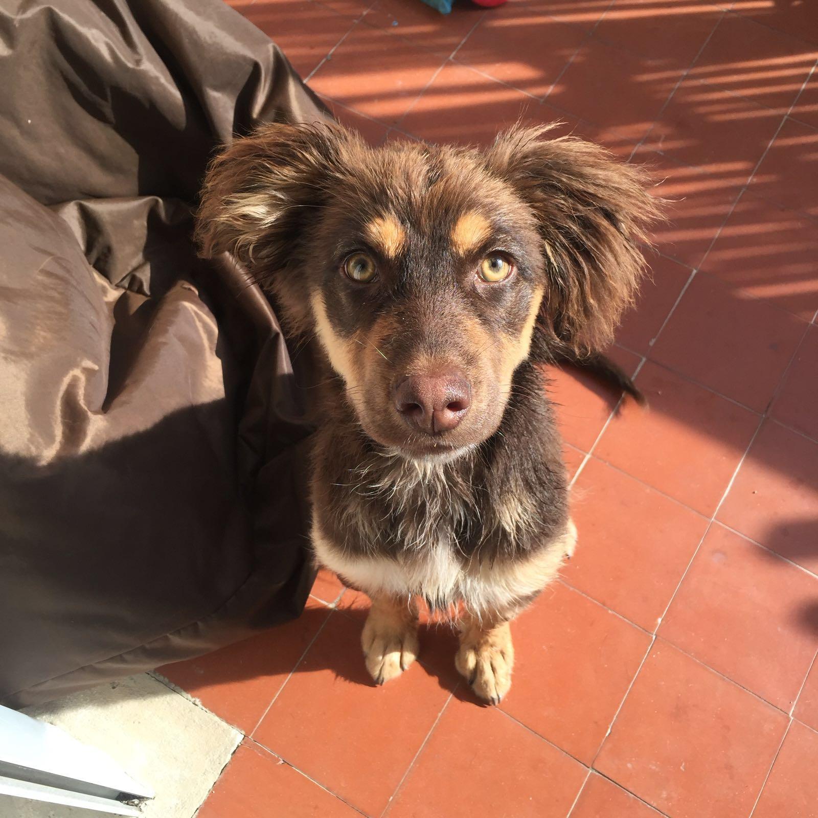 dogsanimal-blog-emocion-animal-educacion-canina-cachorros