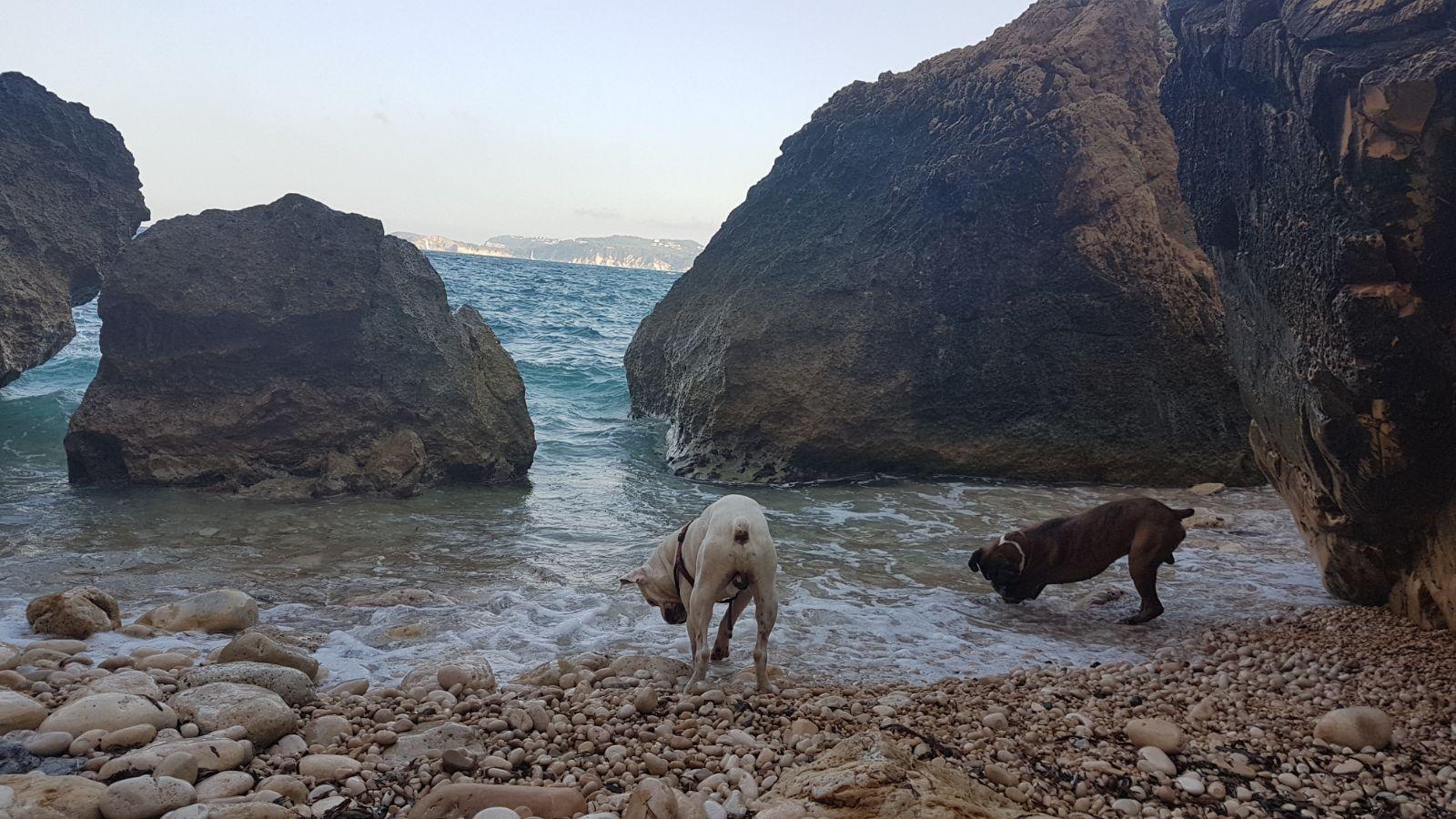 dogsanimal-adios-hachiko-blog