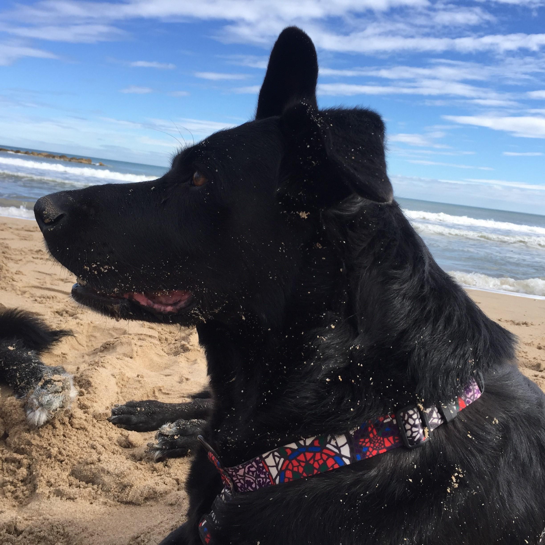 dogsanimal-emocion-animal-admirar-reino-animal-blog
