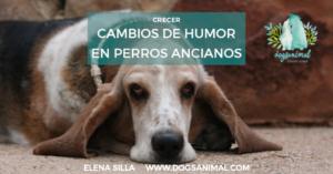 Cambios de humor en perros ancianos